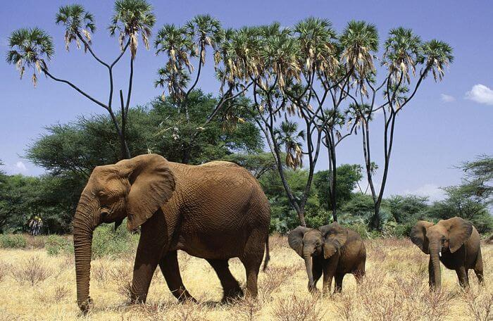 elephant with children