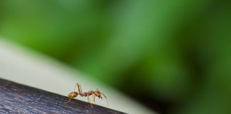 ant on a log
