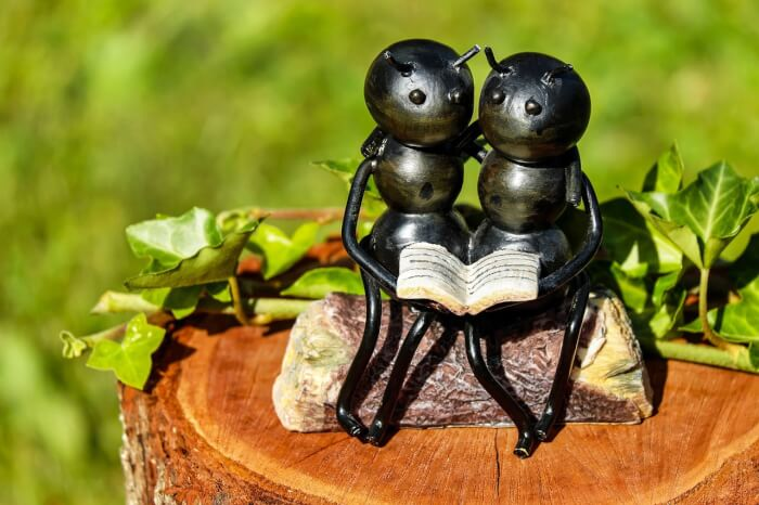 Ant buddies