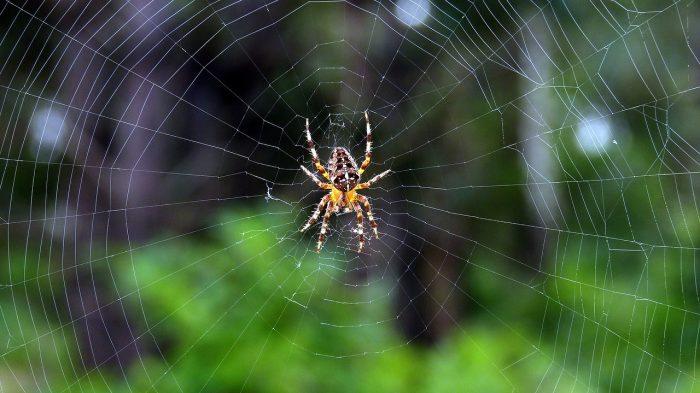 Spider Repairing Web