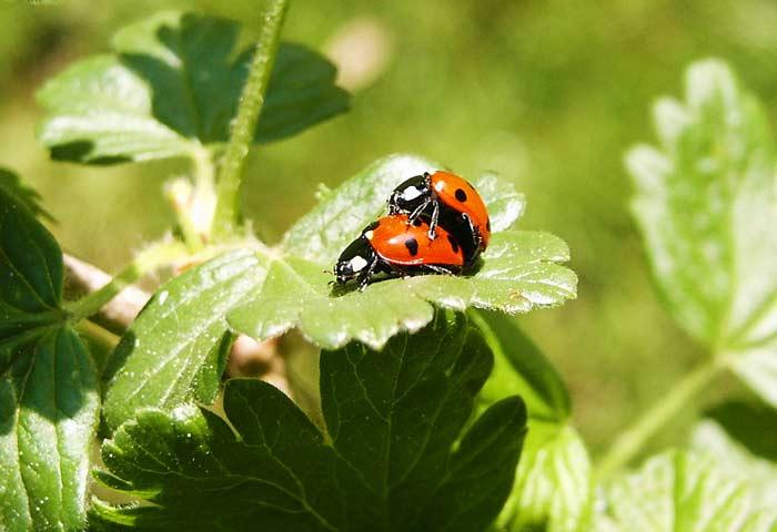 Photo: jacek zmudzki / Flickr