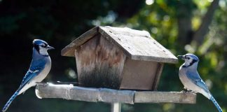 Blue Jays Birdhouse