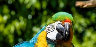 Parrots in Love