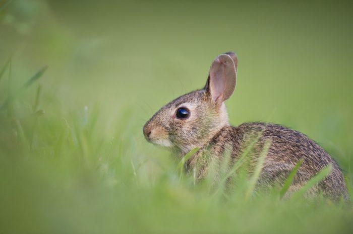 adorable rabbit