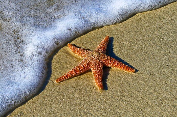 Can Starfish Eat Fish Food