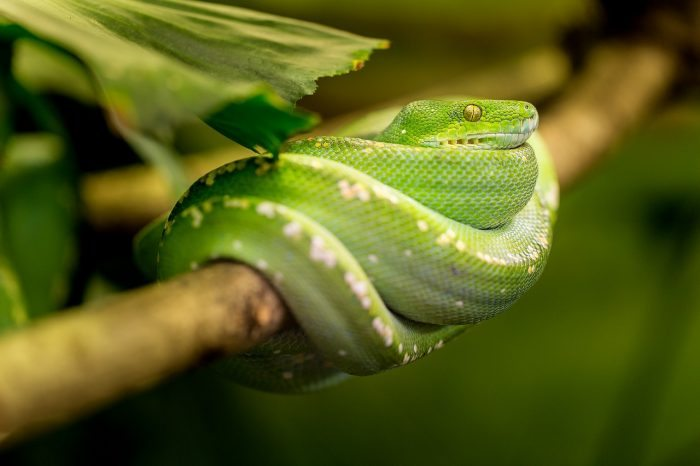green snake coiled around tree