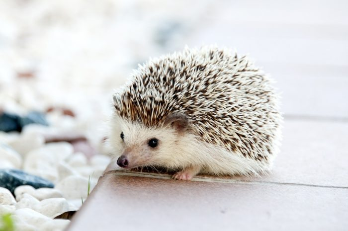 What Are Good Low Maintenance Pets Joy Of Animals